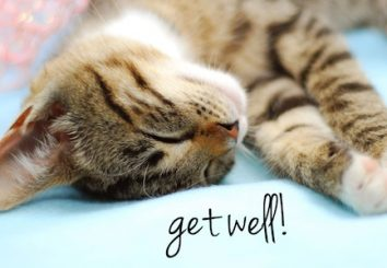 Get_Well_Cat_MAFFINAL5-3-12