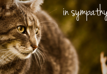 Sympathy-Cat_MAFFINAL4-13-12.png-small