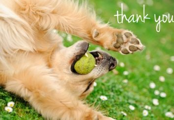 Thank_You_Dog_MAFFINAL5-3-12